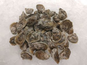 50 Oysters - Buy on our online store - Ward Oyster